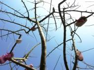 shoe-tree2